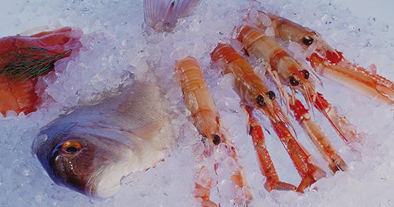 seafood-freezing